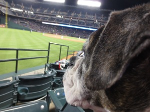 Roxie studies the players.