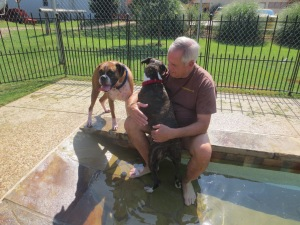 Roxie & Rex check out the pool
