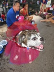 Bark at  the Park June 5 2014 003