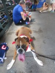Bark at  the Park June 5 2014 006
