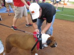 Bark at  the Park June 5 2014017