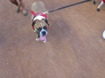 Bark at  the Park June 5 2014019