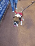 Bark at  the Park June 5 2014020