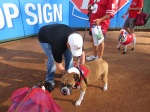 Bark at  the Park June 5 2014 027