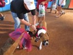 Bark at  the Park June 5 2014 028