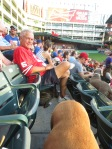 Bark at  the Park June 5 2014 035