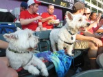 Bark at  the Park June 5 2014 037