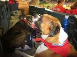 Bark at  the Park June 5 2014 078