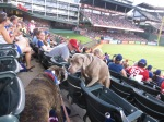 Bark at  the Park June 5 2014 045