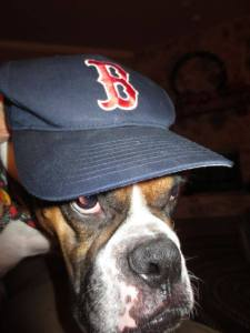 Don't mess with a Red Sox Fan either