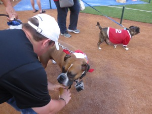 Rex chosen for reporting at Texas Rangers Bark in the Park